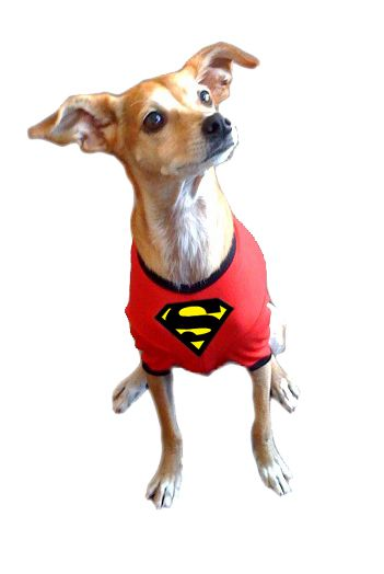 promotional products- custom doggie superman shirt-screenprinted
